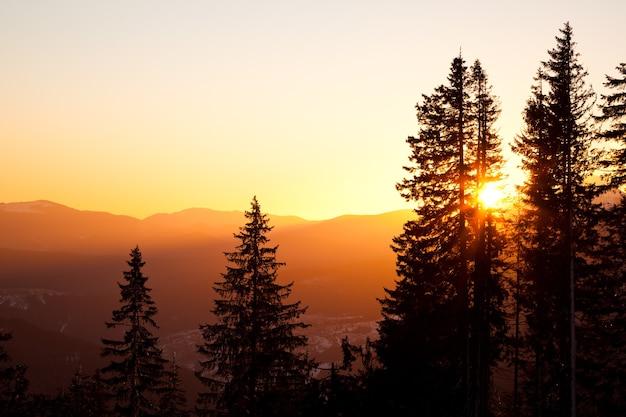 Copas de árboles de pino alto sobre colinas y fondo del valle con brillante puesta de sol dorada arriba en verano