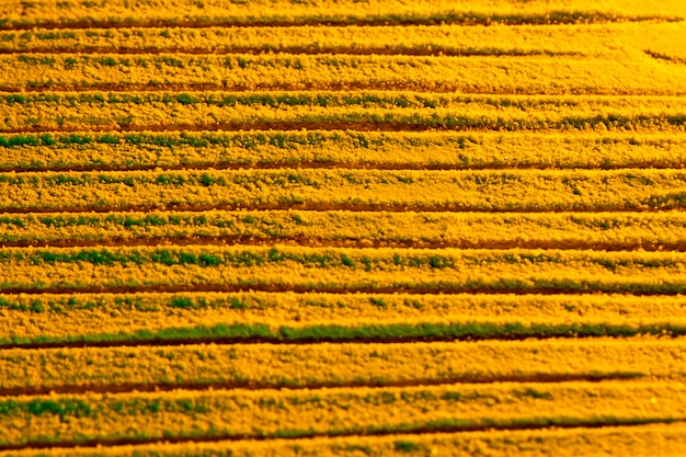 Copia amarilla espacio arena fondo