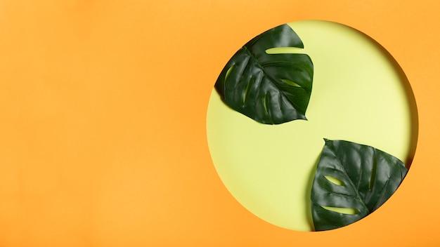 Copia espacio círculo de papel con hojas