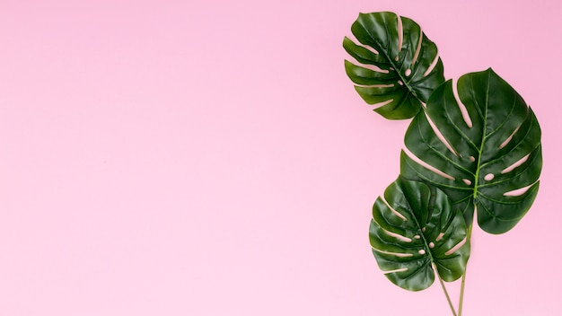 Copia espacio fondo rosa con hojas de palmera.