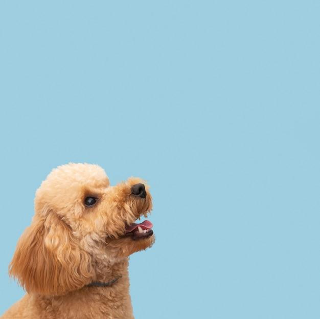 Copia espacio lindo perro doméstico