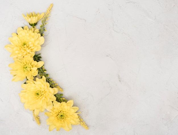 Copia espacio primavera rama de flores de gerbera