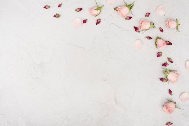 Copia espacio primavera rosa yemas flores