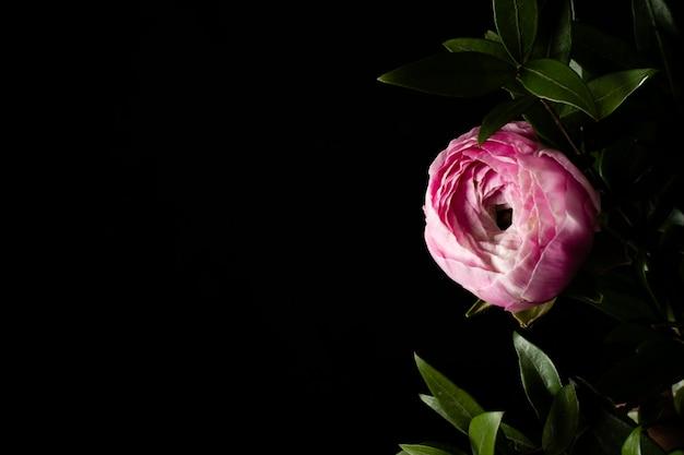 Copia-espacio rosa rosa