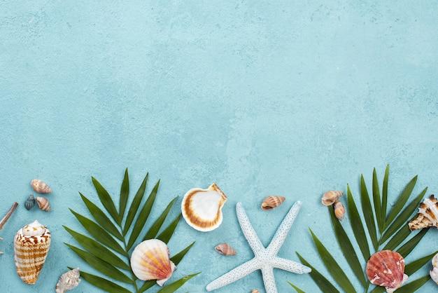 Copiar espacio conchas y hojas