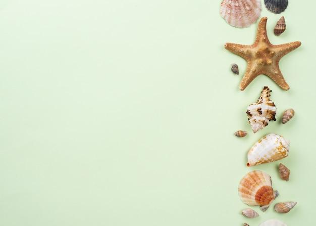 Copiar espacio de estrellas de mar y conchas alineadas
