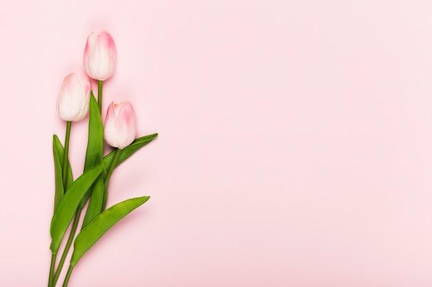 Copiar espacio tulipanes en flor sobre fondo rosa