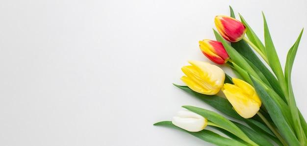 Copiar espacio tulipanes flores