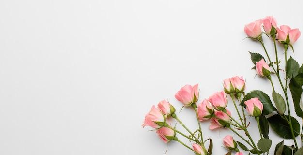 Copiar rosas de espacio