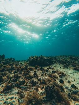 Coral bajo el agua con agua azul