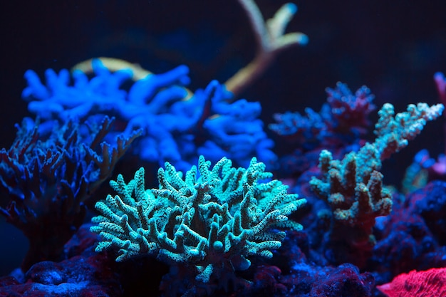 Corales en un acuario marino.