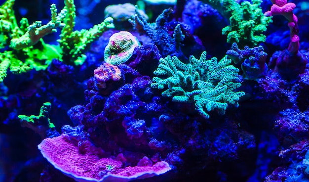 Corales vivos en un gran acuario marino.