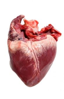 Corazón de cerdo crudo aislado en un blanco