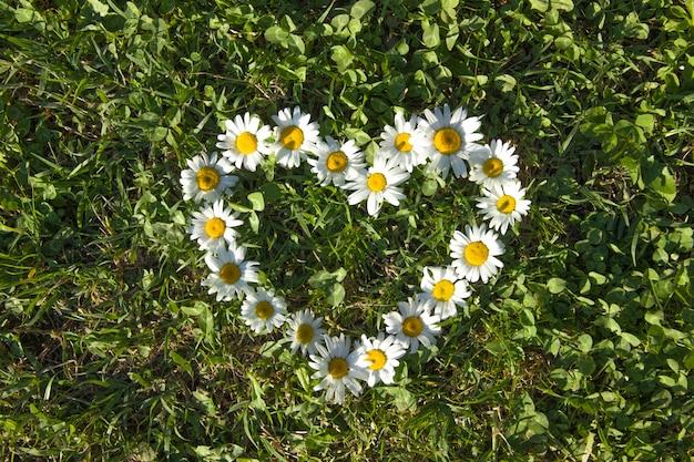 Corazón hecho de margaritas en un prado verde