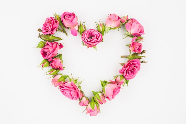 Corazón hecho con rosas rosadas sobre fondo blanco