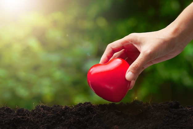 Corazón rojo en la mano de la mujer sobre fondo de naturaleza