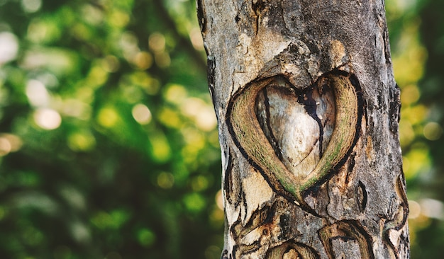 Un corazón tallado en el árbol