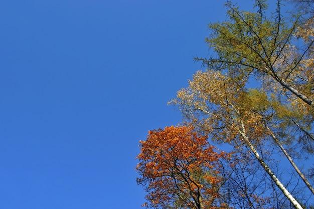 Corona del árbol en la superficie del cielo