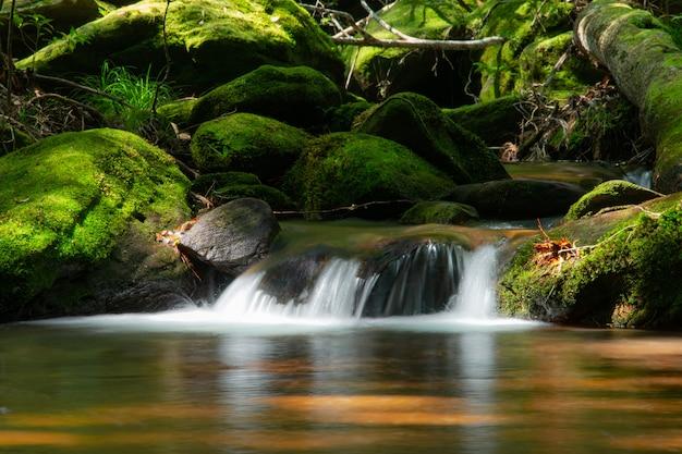 Corriente de agua de montaña que fluye en bosque verde