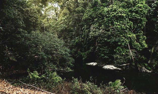 Corriente de agua en la selva tropical