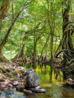 Corriente de río, piedra y árboles verdes en el bosque tropical
