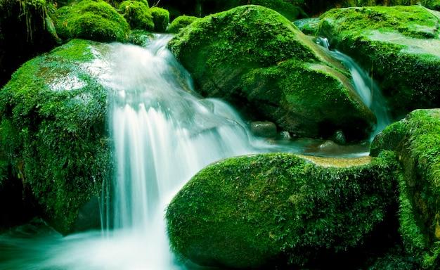 Corriente pacífica de la naturaleza, nueva zelanda.