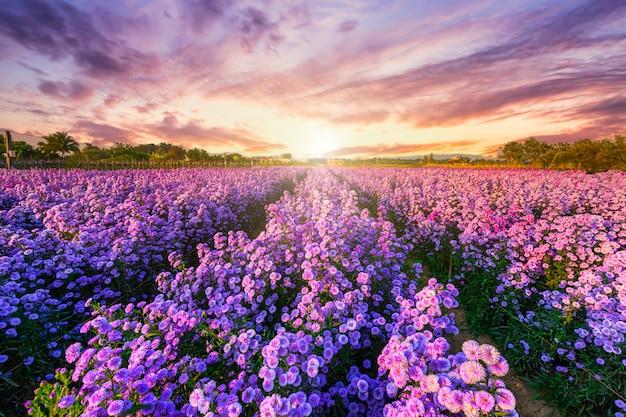 Cortador campo flor floreciendo