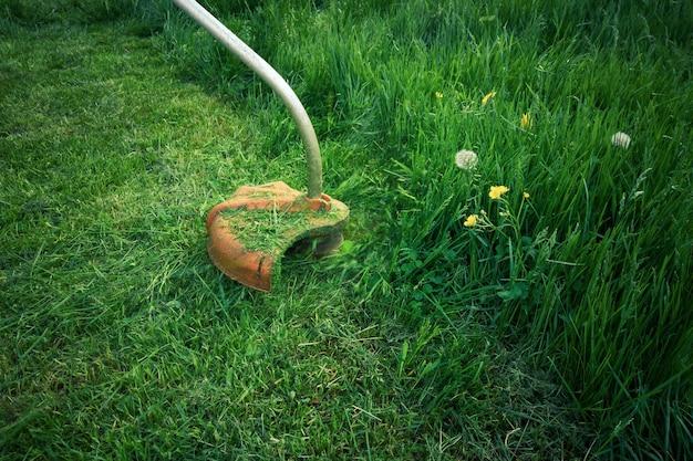 Cortadora de césped eléctrica cortando césped en un césped cubierto, trabajos de jardinería de verano