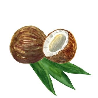 Cortar el coco y las hojas. ilustración acuarela dibujada a mano. aislado.