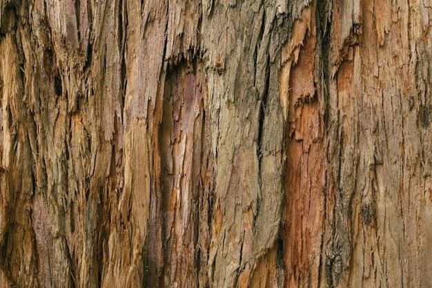Corteza de un árbol adulto en el bosque