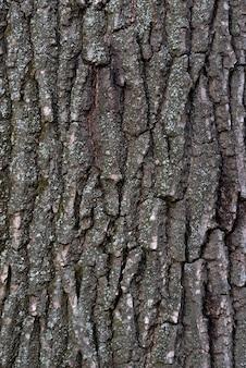 Corteza de árbol de cerca. fondo abstracto. superficie de textura rugosa. marco vertical