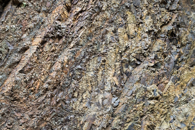Corteza de árbol de cerca
