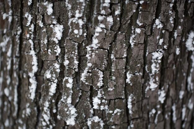 La corteza del árbol en la nieve.
