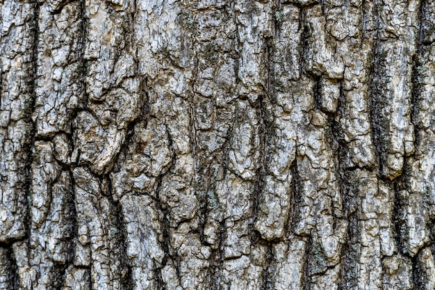 Corteza de árbol seco con grietas y fondo de musgo de cerca