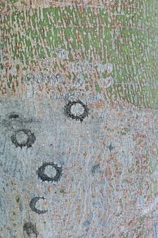 Corteza de árbol con superficie rugosa