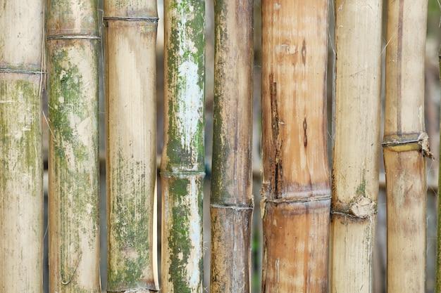 La corteza de madera de bambú envejeció el fondo oriental de la textura. telón de fondo de rama de madera