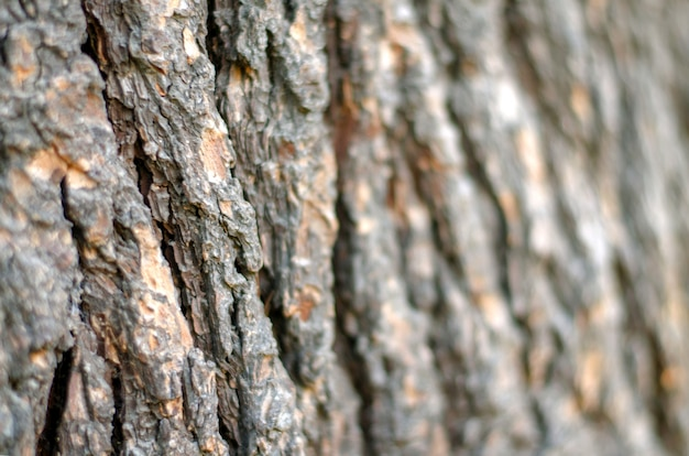 La corteza de madera borroneada de fondo.