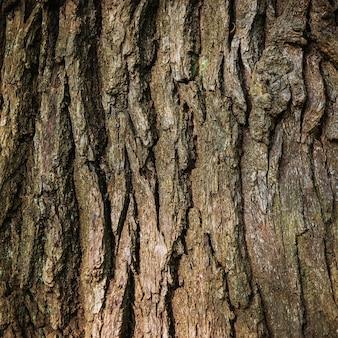La corteza de roble marrón se puede utilizar para el fondo