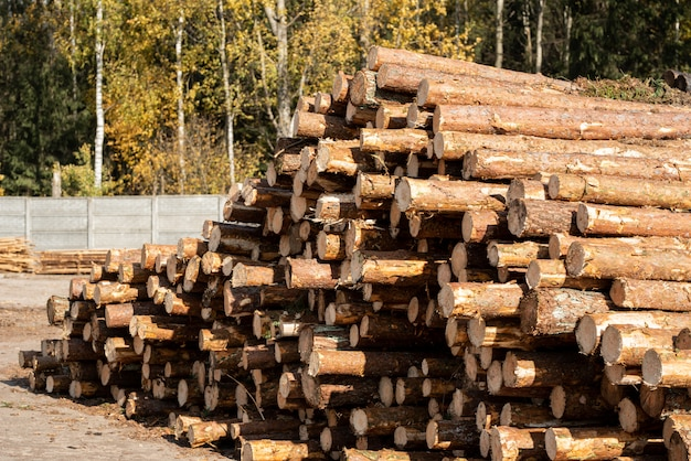 Cosecha de madera - troncos de árboles talados apilados