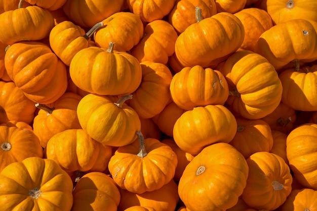 Cosecha de otoño, mucha calabaza en el mostrador, el mercado.