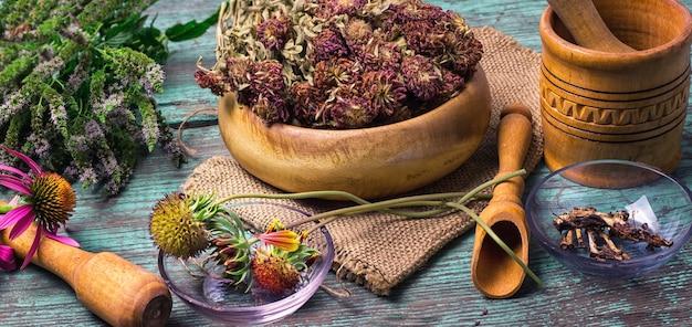 Cosecha de plantas medicinales.