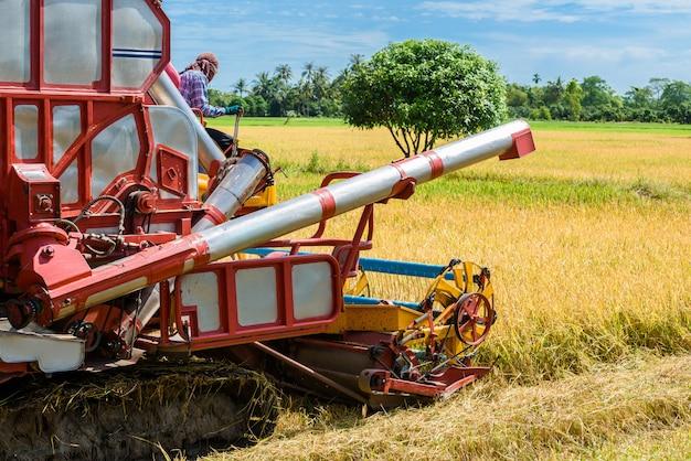 Cosechadora en acción en campo de arroz. la recolección es el proceso de recolección de un cultivo maduro.