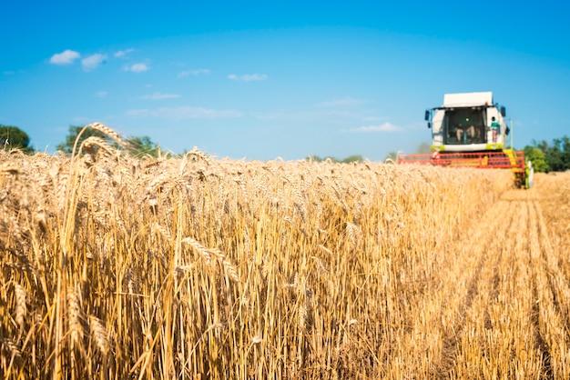Cosechadora trabajando en el campo de trigo Foto gratis