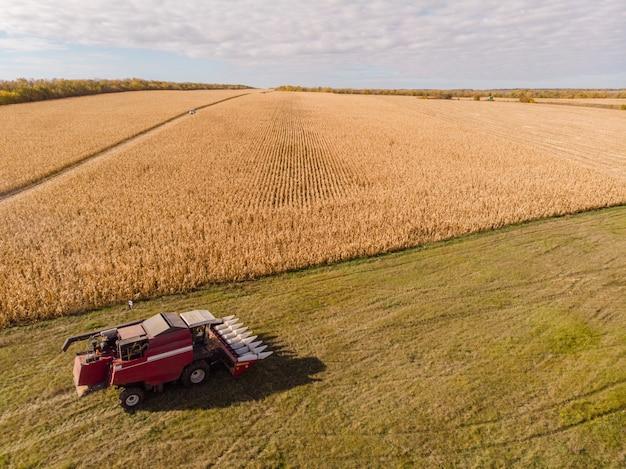 Cosechando maíz en el horizonte de otoño aéreo, disparando desde el aire