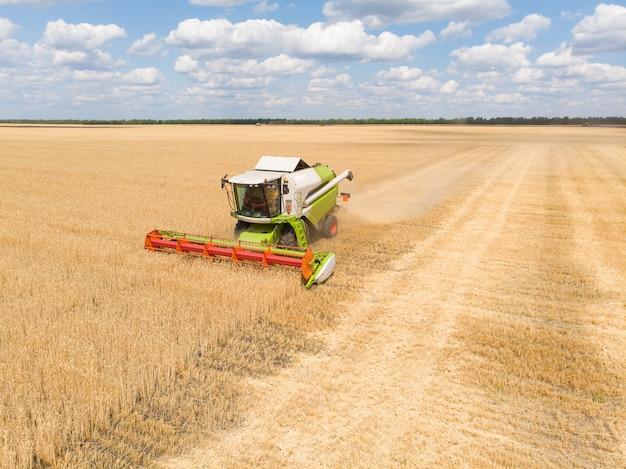Cosechando trigo en verano