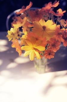 Cosmos flores en el jardín. enfoque suave y color tonificado.