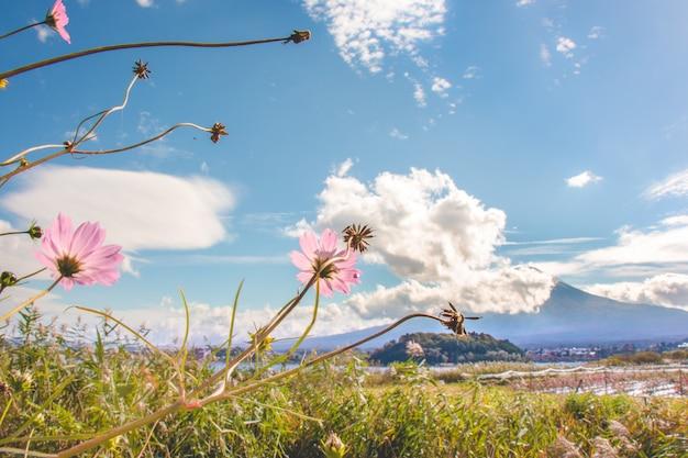 Cosmos rosa flores florecientes con