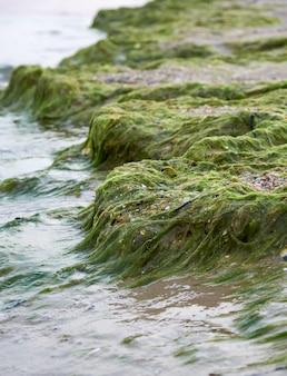 Costa de arena con algas verdes después de una tormenta,