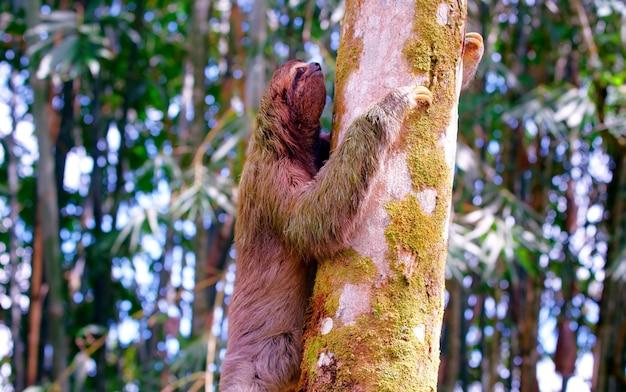 Costa rica vida silvestre naturaleza animales