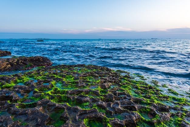 Costa rocosa con algas verdes